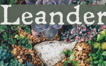 Leander-Font-Family-Free-Download